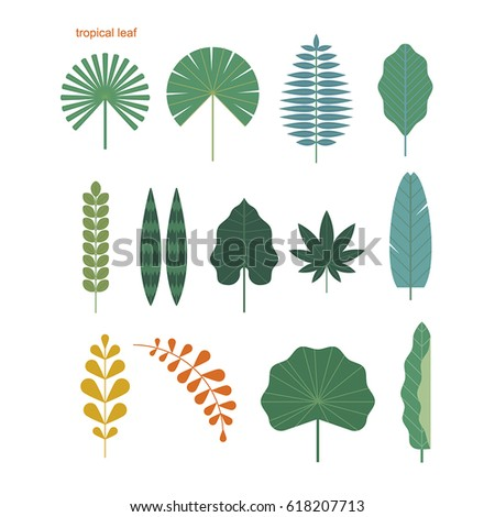 tropical leaf source vector illustration flat design