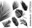 tropical leaf vector - stock vector
