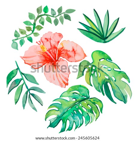 Tropical leaves isolated on white background. Tropical plants: exotic flower hibiscus and leaves. Vector. - stock vector