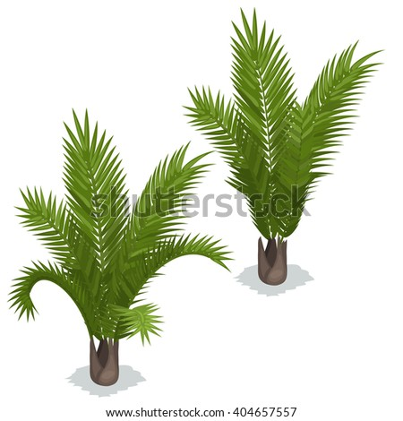 Tropical palm tree isolated on white background. Vector illustration.