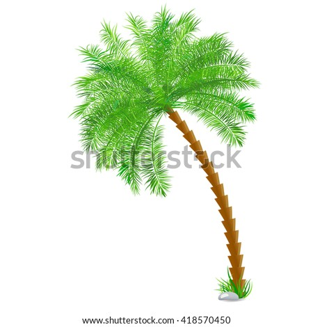 Tropical palm tree over white - stock vector