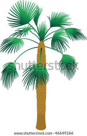 Tropical palm tree vector - stock vector