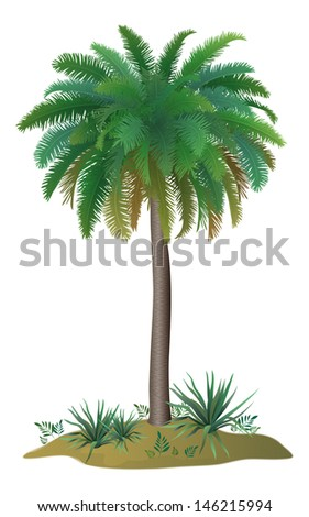 Tropical palm tree with green leaves and plants on white background. Vector
