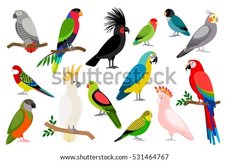 Parrot Stock Images, Royalty-Free Images & Vectors | Shutterstock