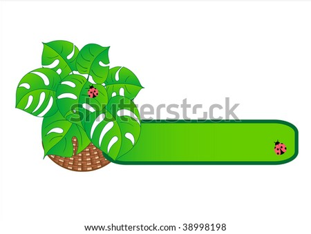 Tropical plant in basket. Vector  illustration