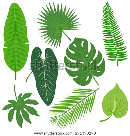 Tropical plant leaves vector collection. - stock vector