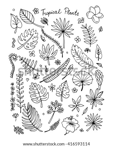 Tropical plants, sketch for your design - stock vector