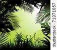 Tropical rainforest. - stock photo