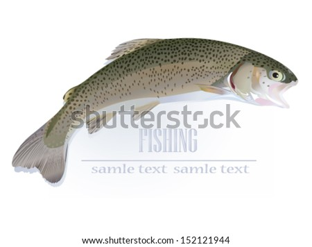Trout fish - vector illustration - stock vector