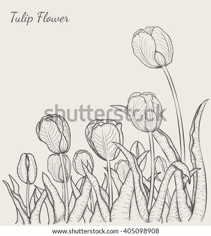 Tulip flower by hand drawing.Tulip design elements and highly detailed.