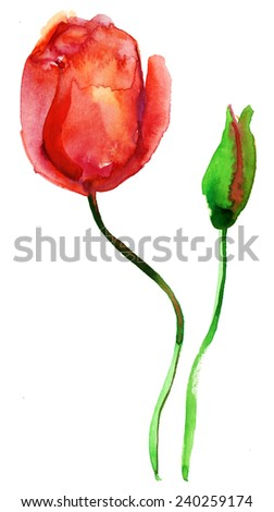 Tulip flower, vector  illustration - stock vector
