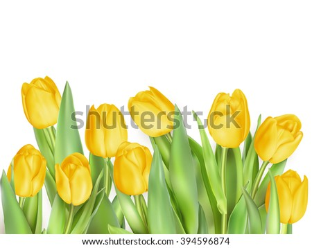 Tulip flowers isolated. EPS 10 vector file - stock vector