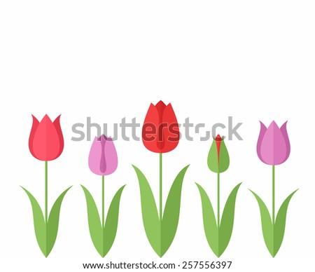 Tulip. Set