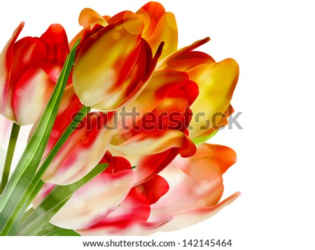 Tulips over white with copyspace. And also includes EPS 10 vector - stock vector