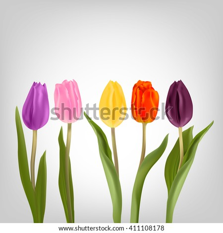 Tulips various shapes and colors. Red, purple, yellow, pink, maroon tulip on a light background. Flowers for decoration.