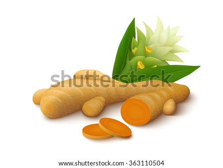 Turmeric root with flower isolated on white background. Vector illustration.