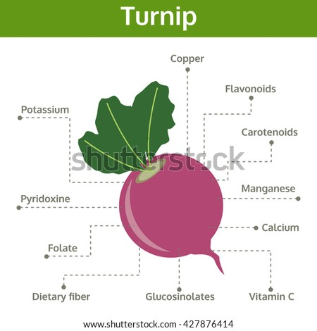 turnip nutrient of facts and health benefits, info graphic vegetable, food vector - stock vector