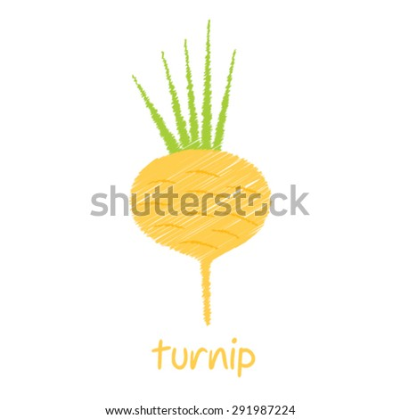 turnip, sketch design vector - stock vector