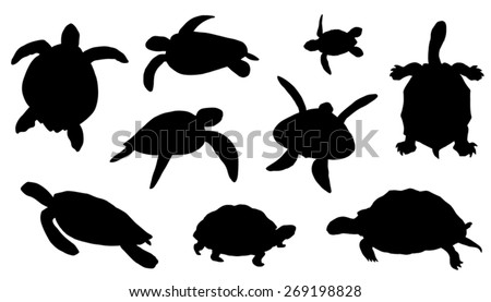 turtle silhouettes on the white background - stock vector