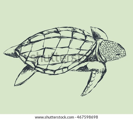 turtle swimming. rough outline. hand drawing, line sketch. vector illustration