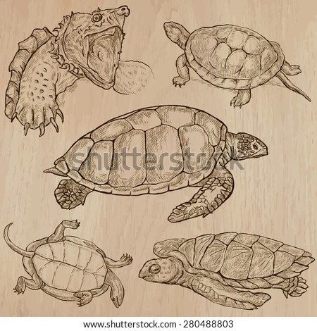 TURTLES (pack no.2) - Collection of an hand drawn vector illustrations. Each drawing comprise a few layers of lines, the colored background is isolated. Easy editable. (Name of species contained.)