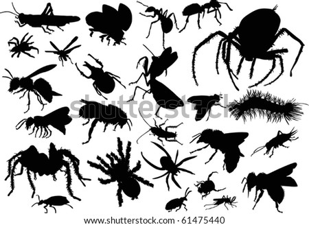twenty five insect silhouettes isolated on white background