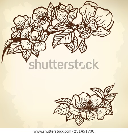Twig of magnolia flowers and leaves. Vintage drawing. - stock vector