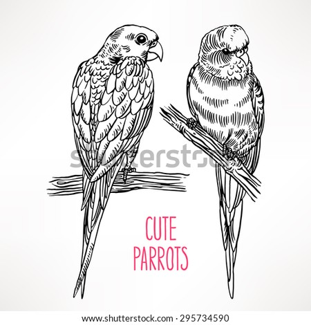 Two beautiful exotic parrot. hand-drawn illustration