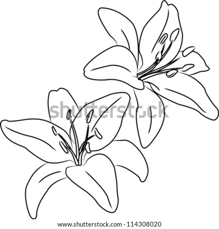 ... Of Two Black And White Hand Drawn Flowers Stock | Black Models Picture