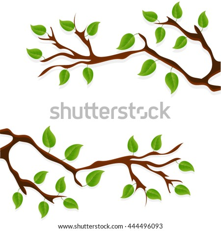 Two branches isolated on white background