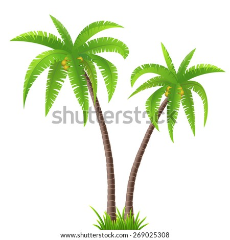 Two coconut palm trees on white background - stock vector