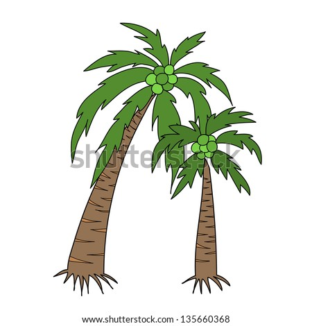 two coconut tree with bunch coconuts