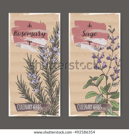 Two color labels with sage and rosemary sketch. Culinary herbs collection. Great for cooking, medical, gardening design.