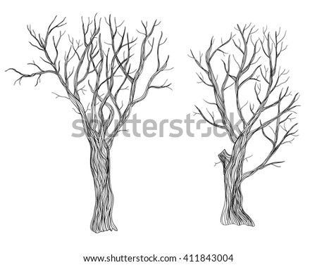 Two hand drawn bare trees on white background.