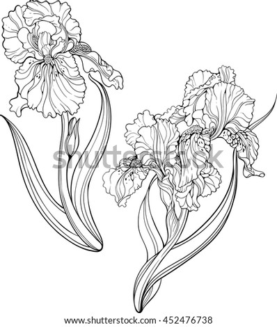 Iris flower stock images royalty free images vectors for Iris flower coloring page