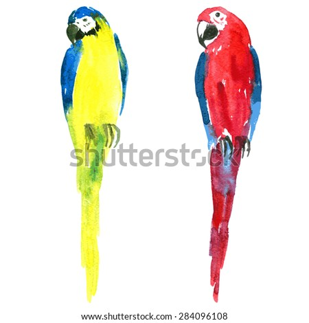 two macaw parrots painted by watercolor, yellow and red and blue ara, hand drawn vector illustration - stock vector
