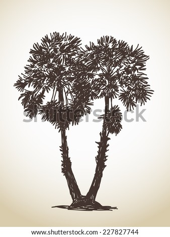 Two palm trees sketch. Isolated. Hand drawn illustration - stock vector