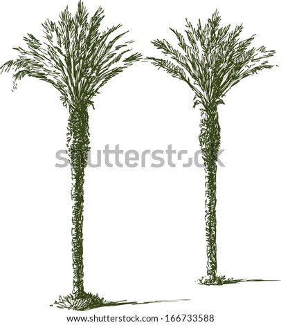 two palms - stock vector