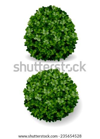 two round bush decorative plant boxwood eps8 - stock vector