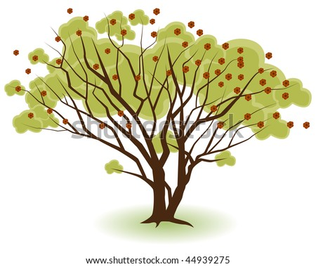 Two trees growing together isolated on a white background.