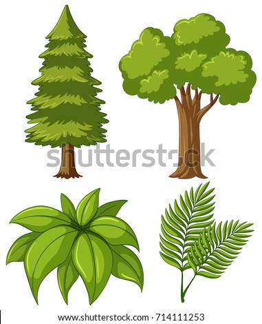 Two types of trees and two kinds of leaves illustration