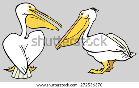 Two White Pelicans - stock vector