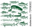 Types freshwater fish.  Silhouettes of fish. Isolated-background objects. Vector illustration. - stock vector