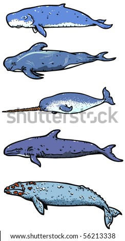 Types of sea whales illustration - stock vector