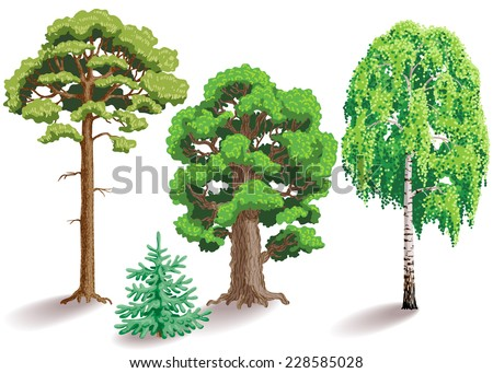Types of trees. Oak, birch, fir, pine isolated on white. - stock vector