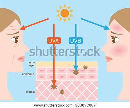 Does ultraviolet radiation penetrate skin