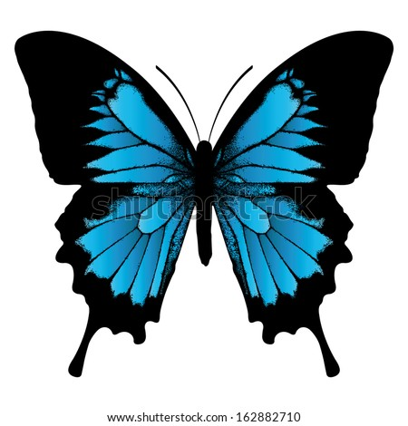 Ulysses butterfly (Papilio ulysses) or Blue Mountain Butterfly or Blue Mountain Swallowtail isolated on white background - stock vector
