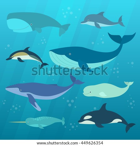 Indefinitely moby dick vector pity