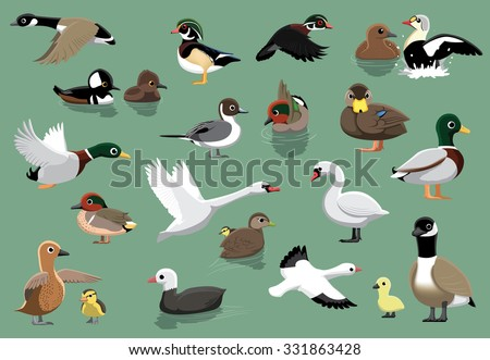 US Ducks Cartoon Vector Illustration - stock vector