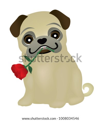 Valentines day pug dog holding a rose in his mouth